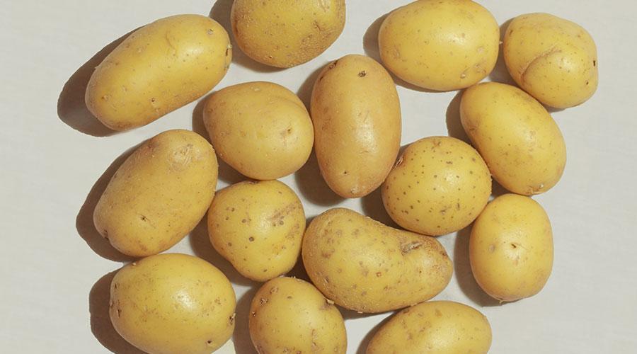 La patata de Sa Feixa d'Eivissa es de proximidad, es ecológica y ¡es ibicenca! Mister Chippy te lleva a la mesa lo mejor de la huerta ibicenca.