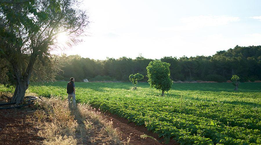 Frutas y verduras en Ibiza