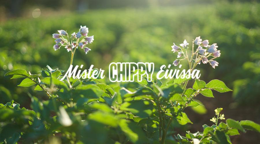 Nueva web de Mister Chippy