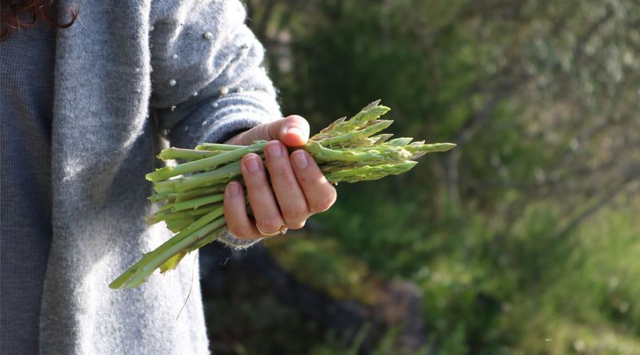 trucos para cocinar esparragos - escogerlos
