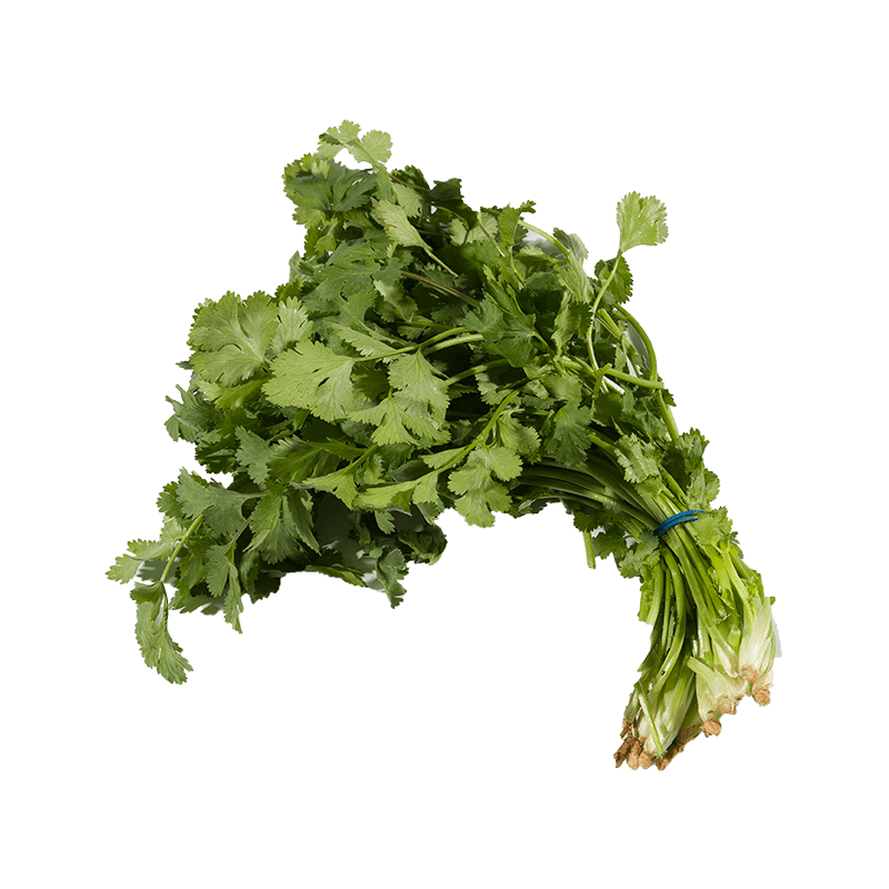63 cilantro